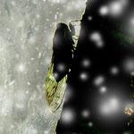 イラストレーション:『遠い夏のゴッホ』(2013年)