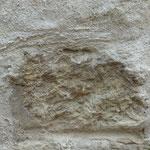 Ein Kalkstein mit Muschelfossilien