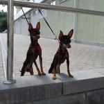 Гоша и Леди