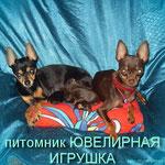 """Тина и Гоша и помет """"Б"""""""