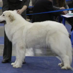 Echo de'Chien Amazon Princess - Eurasia Champion, 1xCACIB