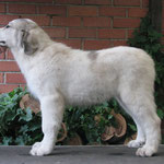 Echo de'Chien Carmen - available (female)