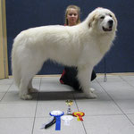 Echo de'Chien Aslan Warrior - Estonian & Finnish Champion, Winter Cup Winner 2013
