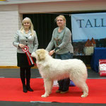 Echo de'Chien Conrad - BEST IN SHOW PUPPY. photo: Külli Ragel