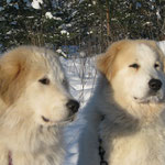 Echo de'Chien Conrad 8 months & Echo de'Chien Bellatrix 2 years