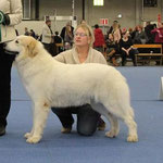 Echo de'Chien Bellatrix - Estonia, Lithuania, Finnish Champion, Tallinn Winner 2013, Finnish Winner 2013,  3xCACIB. Photo by Chenespace