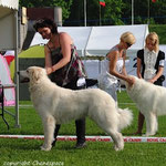 Echo de'Chien Bellatrix - Estonia, Lithuania, Finnish Champion, Tallinn Winner 2013, Finnish Winner 2013,  3xCACIB