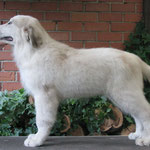 Echo de'Chien Conrad - available (male)