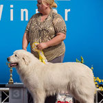 Lumienkelin Amatsoni - Estonian Veteran Champion, Estonian Veteran Winner 2013 + BIS Veteran 3rd in Estonian Winner show and BIS Veteran 1 in Estonian Speciality show 2013