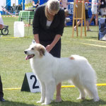 Echo de'Chien Atalja - Estonian Champion. 1xCACIB
