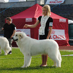 Echo de'Chien Bianca - Baltic Winner 2013,Winter Cup Winner 2013, Best female in Estonian Specialty show 2013, 1 CAC away compleating her Estonian and Latvian Champion title