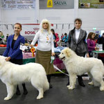 29.03.2014 Rakvere National show. BOB - Echo de'Chien Bianca & BOS Echo de'Chien Cruise