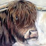 # Schotse Hooglander # 80x100