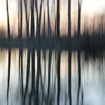 Zündorfer Bäume bei Hochwasser