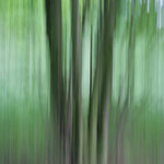 Zündorfer Bäume