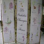 Les orchidées sauvages de France