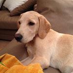 Hugo mit 5 Monaten