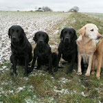 von links nach rechts: Audrey, Fine, Tjara, Beele, Leesha
