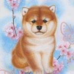 「柴と桜」 F0号 紙本彩色・箔  2016年制作