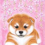「仔柴犬」  F0号  紙本彩色  2015年制作