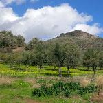 Kartalos mit Olivenbäumen