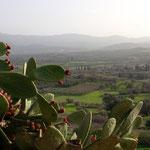 Kaktusfeigen und Agios Ioannis
