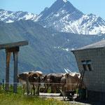 Alp Lumbrein mit Pez Terri im Hintergrund.