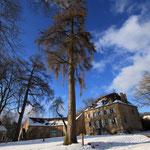 En hiver, lorsque la neige s'installe, au premier plan le Mélèze à découvrir lors de la balade de l'Arboretum.
