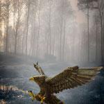 Aigle du Caucase