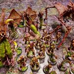 Aliens horde