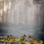 Oiseaux du lac Stymphale