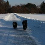 Zainingen 2 Freunde beim joggen, Bobby und Akiro