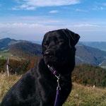 Balou geniesst die Aussicht auf 1395 Meter ü M.