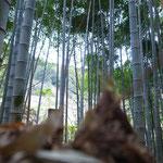 竹林開拓 2013.12 http://inakanokazehonoki.jimdo.com/