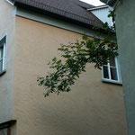Auch zwischen den Häusern ranken sich Reben - liebevoll gepflegt von den Hausbesitzern.