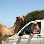 In Marokko küssen dich die Kamele ;)
