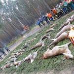 Drückjagd in Torgelow-Pasewalk (D), Strecke 12.11.:  10 Rotwild, 1 Damwild, 11 Schwarzwild, 8 Rehwild, 4 Fuchs
