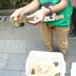 ...während die ganz Jungen (der Verkäufer war vielleicht zwölf :O) Babyschildkröten verkauft haben!