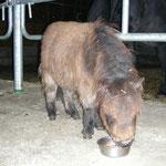 Pumba v.d. Gerlingermühle 2012