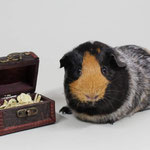 Meerschweinchen Ausstellung / Copyright Kerstin Seetzen