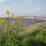 大川と佐賀を結ぶ新田大橋と菜の花