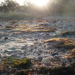Seegras im Morgenlicht I