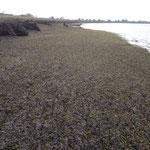 Teppich aus Seegras