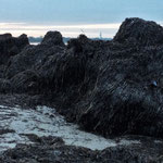 Seegrasberge von der Natur aufgetürmt V