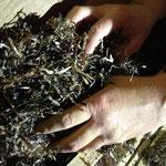 auf der Baustelle: Einfüllen des Dämmstoffs Seegras in Hohlraum