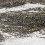Seegras in großen Mengen II