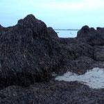 Seegrasberge von der Natur aufgetürmt III