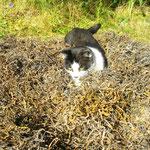 Katzen würden mit Seegras dämmen!