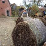 Seegrasrundballen frisch aus Dänemark