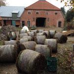Rundballen à 200 kg Seegras